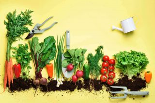 Organic vegetables and garden tools